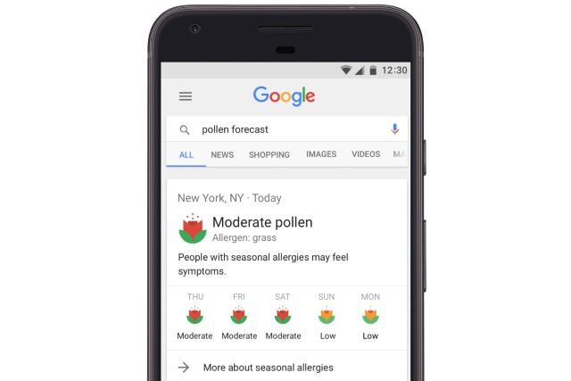 Google научился предупреждать об опасных днях для аллергиков