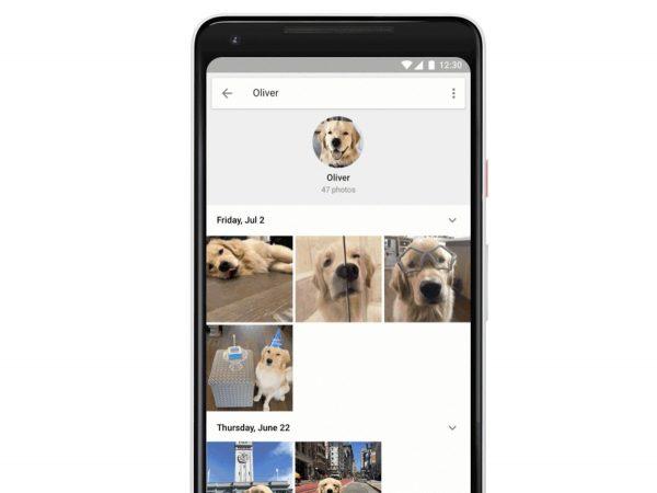 Google представила функцию распознавания питомцев