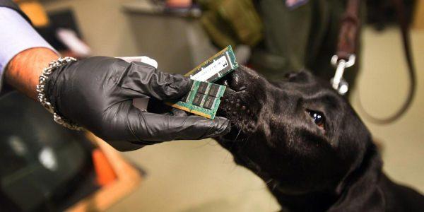 ФБР и полиция США используют собак в качестве живого аналога «Найти iPhone»